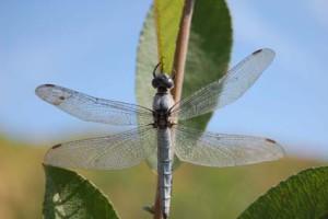 Balade Insectes réduit