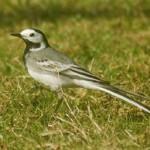 Balade oiseaux réduit