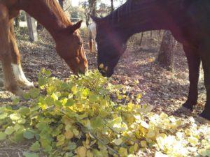 perma-equine-1