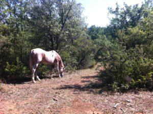 perma-equine-3