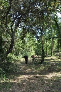 perma-equine-4
