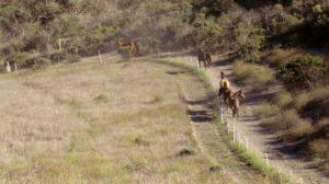 perma-equine-5